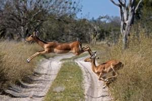 Botswana Attraction Trips