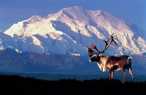 Denali National Park USA