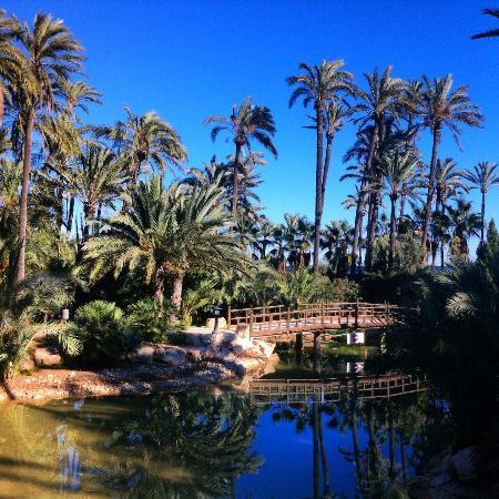 palm grove elche