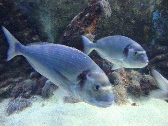 santa pola aquarium valencia