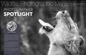 Kruger Photo Safari with African Memory