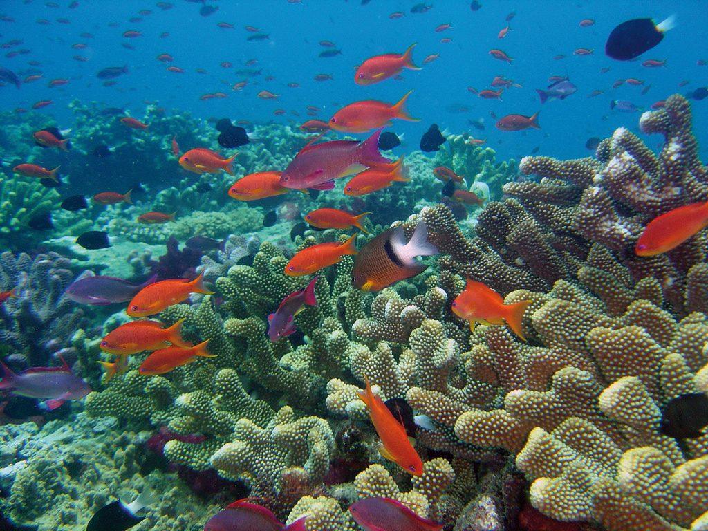 corals in Fiji