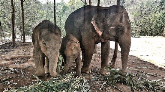 Elephant Sanctuaries Phuket