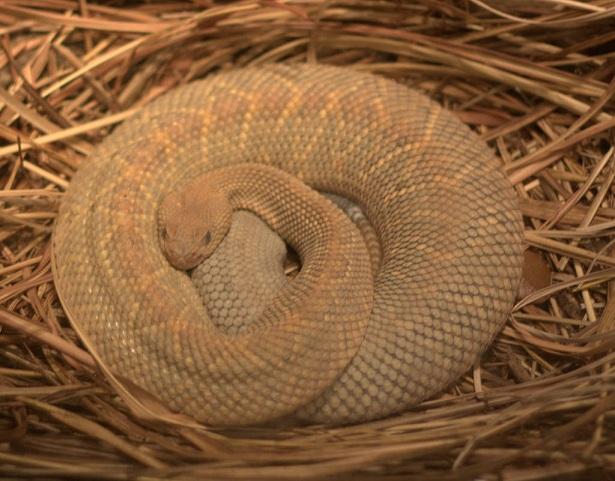 Aruba Arikok National Park rattlesnake