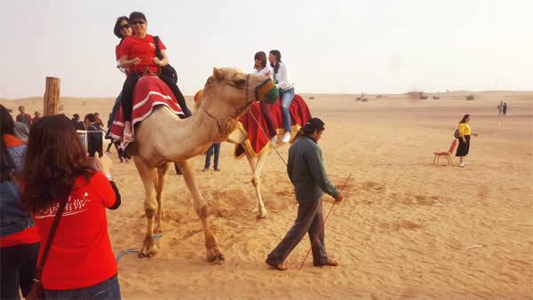 Dubai desert safari - camel ride