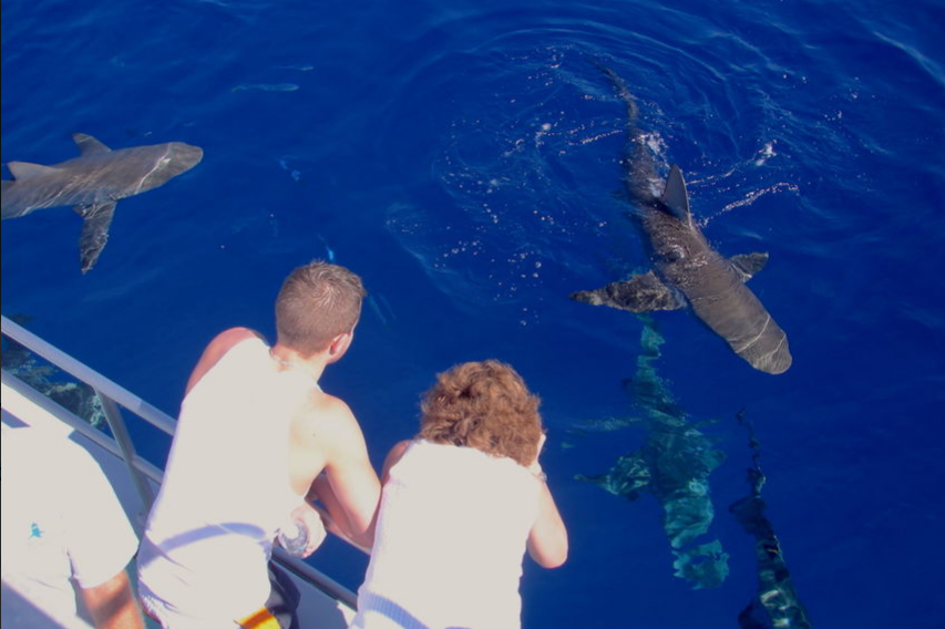 Shark Dive on the North Shore at Oahu from boat